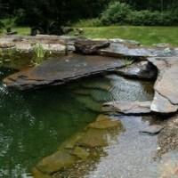Amazing Garden Ponds