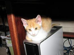 PCの配線飼い猫に切られて困ってます(T ^ T)