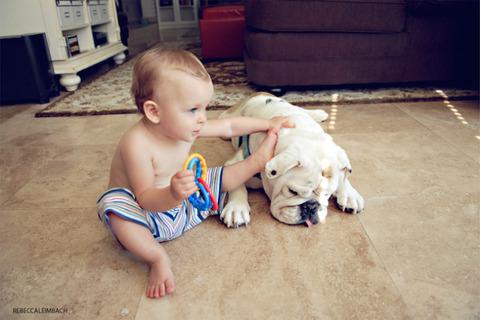 犬と赤ちゃん3