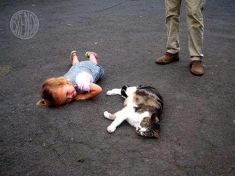 猫と赤ちゃん10