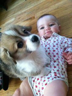 犬と赤ちゃん43