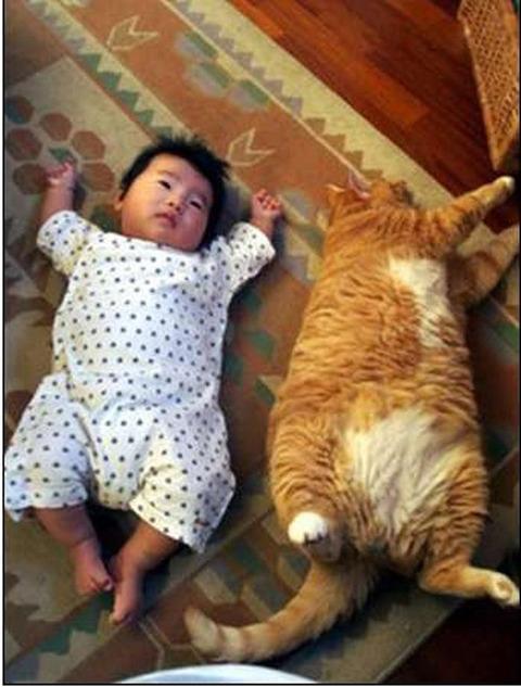 猫と赤ちゃん28