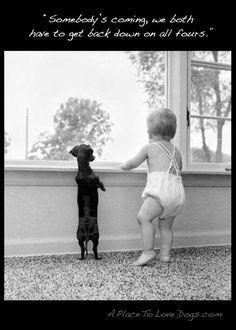 犬と赤ちゃん42