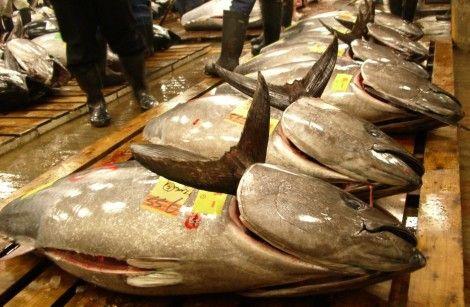 魚卸売市場
