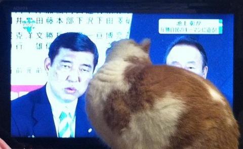 画像で笑ったらおやすみなさい『猫をも狂わす石破の魅力』