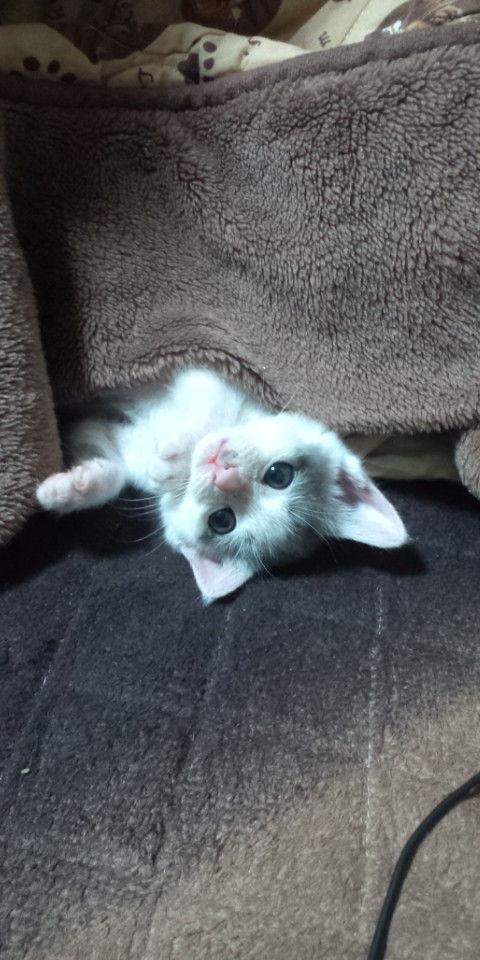 吹くほど可愛い画像『猫の太すぎるシッポ』