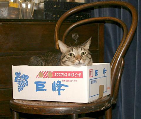 吹くほど可愛い画像『猫に小判』