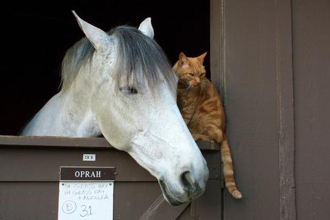 吹くほど可愛い画像『小首をかしげすぎ!な猫』