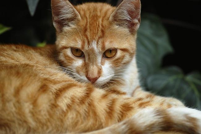 cat-2333413_960_720
