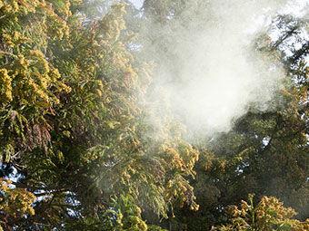スギ花粉 花粉症 花粉前線に関連した画像-01