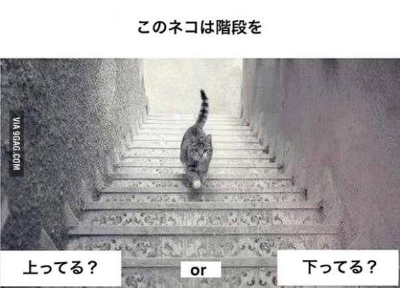 【画像】この猫は階段を、上ってる?下ってる?どっちに見えるかで池沼かどうかわかるらしいぞwwwww