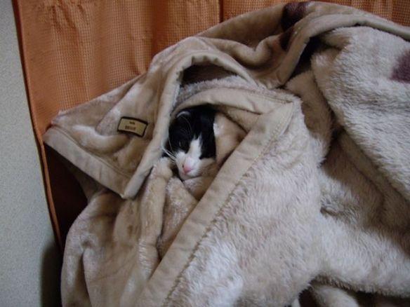 猫ちゃんあったかいンゴwwwwww