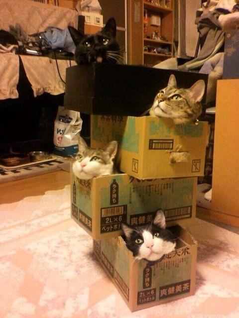 【画像】 「猫用デザイナーズマンション」 豪華すぎるだろこれはwwwwwwwwww