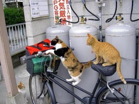 【画像】 ちょっと目を離した隙に、自転車が大変なことになっていました・・・