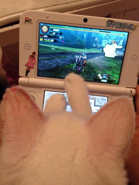 【画像あり】 しょこたん、猫と一緒にモンハンプレイ これは可愛すぎるwwwwwwwwwwwwww