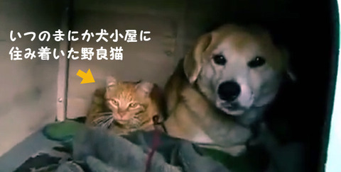 【衝撃】 いつの間にか、犬小屋に野良猫が住み着いていました。 (画像あり) 仲よすぎワロタwww