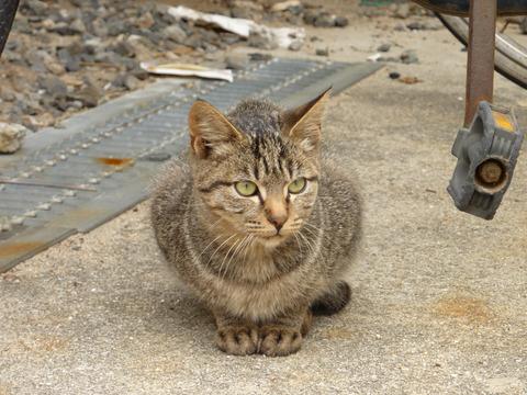 岡山にある猫島に行ってきたので写真うpしていく