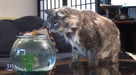 """【クソワロタ】 家の中にある 様々な物体 に 驚く """"ネコ達"""" の 映像集 wwwwwwwwww"""