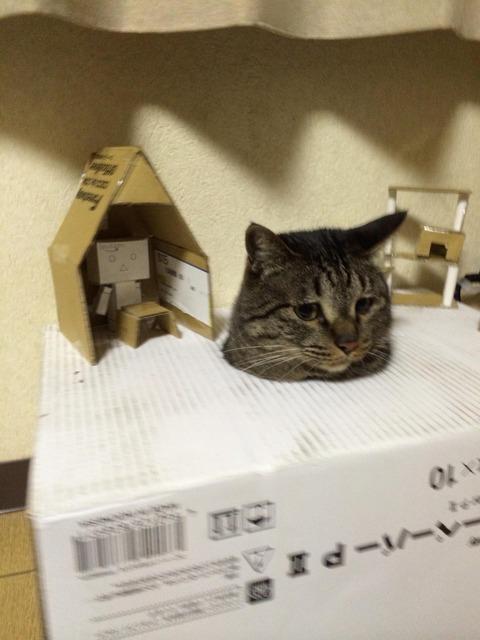 ネコにダンボールハウス作った結果