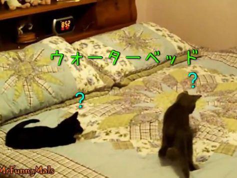 ウォーターベッドと猫00