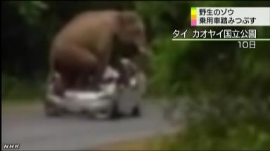 野生のゾウが乗用車を襲い、めちゃめちゃに踏みつぶす