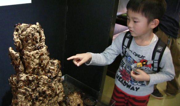 ゴキブリ2千匹ワサワサ、ケースなし展示…園長「ケースで遮断すると恐怖が半減する。飛んでくるかも、臭いなどの感覚大事に」