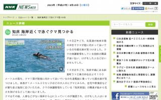 知床 海岸近くで泳ぐクマ見つかる