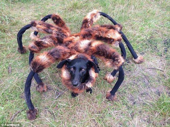 犬に足をつけて蜘蛛っぽくしてみた…海外のイタズラ動画が大反響