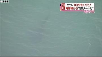 【悲報】茨城沖のサメが16匹に急増