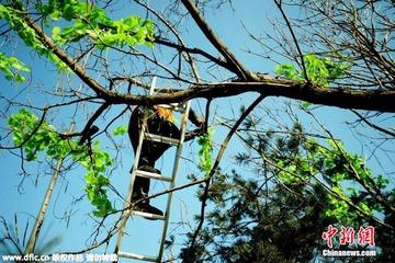 【中国】枯れ木に偽物の葉を付けて緑化対策 → 税金の無駄遣いだと批判殺到