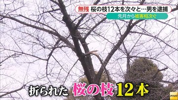 反原発サヨク、ネット上の論戦に負けた腹いせに桜の枝を折って逮捕