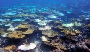 国内最大サンゴ礁97%白化、死滅は5割超…朝日新聞