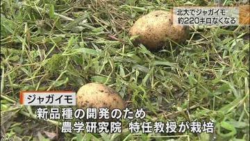 北海道大学が開発中の新品種ジャガイモ220キロが盗まれる → その翌日、韓国の研究機関が「ジャガイモ新品種を開発した」と発表