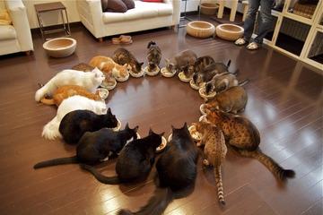 「猫カフェ」を例外的に午後10時まで営業できる規制緩和を継続へ…環境省、恒久化も視野
