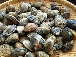 【三重】貝卸売業「一久水産」が韓国産アサリを国産と偽って販売