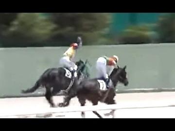 【競馬】丹羽克輝騎手が負けた腹いせに馬を殴って炎上
