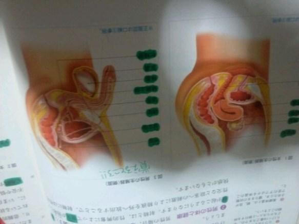【画像】保健の教科書のち●ことま●この図wwwwww