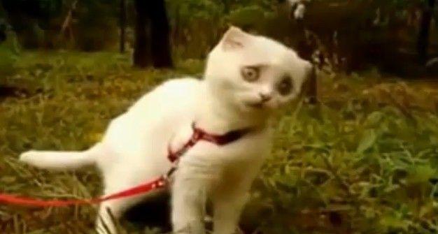 Dramatic-Kitten-kitty1