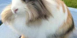 【画像】イケメンすぎるウサギみつけたwwwwwwwwww