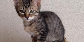 子猫の成長早すぎワロタwwww