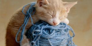 眠れないのでかわいいネコ画像下さい!