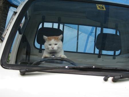 トラックの運転手だけど質問ある?