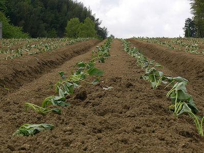 ニートでひきこもりだった俺が農業をはじめた