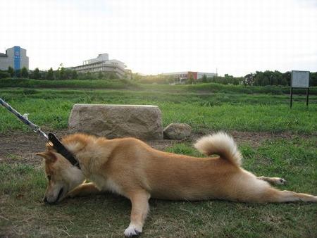 ゆとり社員がペットの犬が死んだから休ませてとか言ってきたwww