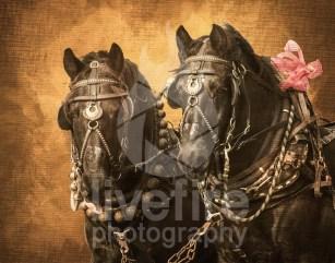 Lebanon Horse Carriage Parade