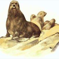 Newfoundland Seal Flipper Pie Recipe