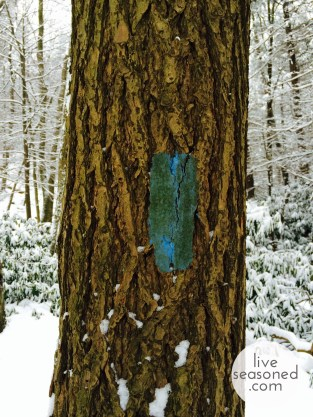 liveseasoned_winterhike_tree