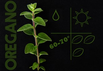 liveseasoned_spring2014_herbs-4