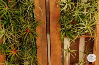 liveseasoned_summer14_airplants-1