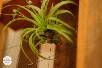 liveseasoned_summer14_airplants-10